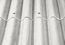 Eternit Wellplatten P5 hellgrau mit Eckenschnitt - 920 mm breit